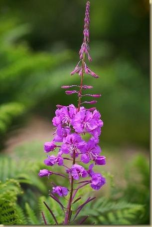 I fiori in giardino piante fiori e giardinaggio for Giardinaggio e fiori